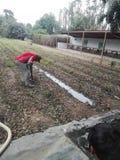 Agricultura w Perú Zdjęcia Royalty Free