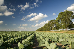 Agricultura y molinoes de viento Fotografía de archivo