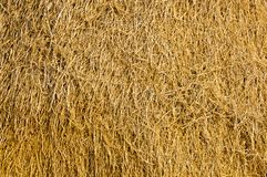 Agricultural Stock Photo