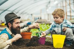 Agricultural activity. agricultural activity of father and son in greenhouse. agricultural activity and environmental royalty free stock images