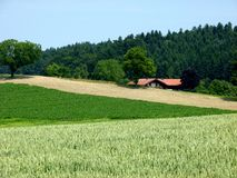 Agricultural area with corn fields and forest and a modern farm. South german landscape with fields and forest and lonely house, Grain fields in the summer, a stock photography