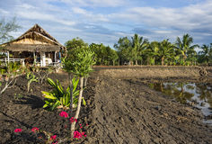 Agricultural Area - Countryside in South East Asia Royalty Free Stock Image