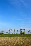 Agricultural areas. In the dry season Royalty Free Stock Photos
