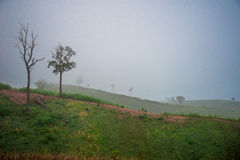 Agricultural areas Mountain with fog Stock Photo