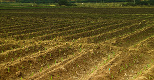 Agricultural Asian tropical region Royalty Free Stock Images
