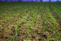 Agricultural Asian tropical region Stock Photos