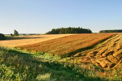 Agricultural autumn field. Harvest, blue royalty free stock photography
