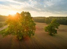 Agricultural background. Green oak trees on plowed field at the. Sunset. Aerial agricultural background Stock Images