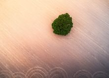 Agricultural background. Green tree in plowed field above view. Aerial agricultural landscape Royalty Free Stock Images