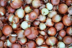 Horizontal background of onion. Agricultural background, horizontal background of onion Stock Photo
