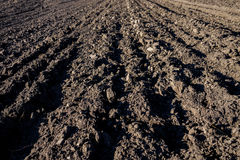 Agricultural Background Of Newly Plowed Field Furrows Ready For New Crops. Close Focus. Agricultural Background Of Newly Plowed Field Furrows Ready For New Royalty Free Stock Photography