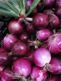 Agricultural background, a pile of organic onions. Stock Photos