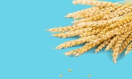 Agricultural on blue background. Shavuot above agricultural agriculture background bouquet Stock Images