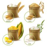 Agricultural Cereals Set. Set of agricultural cereals including sacks with wheat flour, oat, corn and rice isolated vector illustration Royalty Free Stock Photo