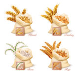 Agricultural cereals - wheat, barley, oat and rice vector set. Agricultural cereals - wheat, barley, oat and rice vector. Set of sacks with grains oat and wheat Stock Images