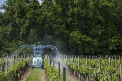 Agricultural chemical treatments in spring vineyard Stock Photography