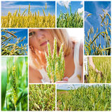 Agricultural collage Royalty Free Stock Images