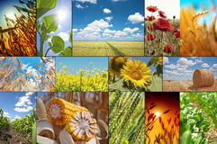 Agricultural collage Stock Images