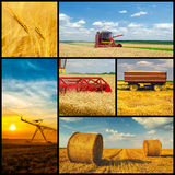 Agricultural collage representing phases of wheat production Stock Photography