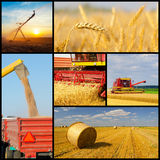 Agricultural collage representing phases of wheat production Royalty Free Stock Photos