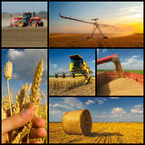 Agricultural collage representing wheat production Royalty Free Stock Photography