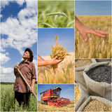 Agricultural collage Royalty Free Stock Image