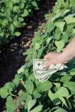 Agricultural concept Stock Photos