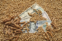Agricultural concept, soybean and money Stock Photography