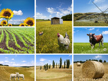 Agricultural concepts Royalty Free Stock Images