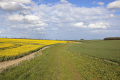 Agricultural countryside in springtime Royalty Free Stock Image