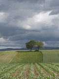 Agricultural crops growing in hilly countryside Royalty Free Stock Image