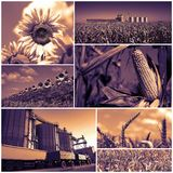 Agricultural Crops Photo Collage Royalty Free Stock Image
