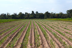 Agricultural cultivation Royalty Free Stock Photos