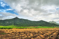 Agricultural Development Stock Image