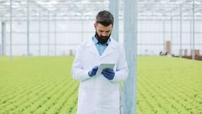 Agricultural engineer analysing plants in greenhouse. Agronomist in greenhouse wearing white coat working ot tablet