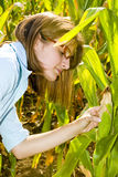 Agricultural engineer in corn field Royalty Free Stock Image