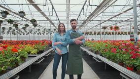 Agricultural Engineer Walks Through Industrial Greenhouse with Professional Farmer. They Examine State of Plants and stock footage