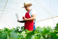 Agricultural engineer working in the greenhouse. Stock Photography