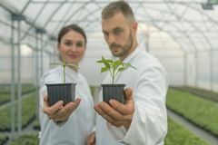 Agricultural Engineers Hand hold Seedlings. Seedlings production Royalty Free Stock Photos