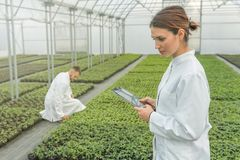 Agricultural Engineers. Seedlings production. Seedlings Greenhou Stock Images
