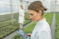Agricultural Engineers. Seedlings production. Seedlings Greenhou Royalty Free Stock Photos