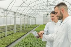 Agricultural Engineers using tablet greenhouse. Seedlings Greenh. Ouse. Agriculture Royalty Free Stock Photos