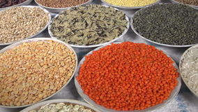 Agricultural Exhibition. The camera moves past the small plates filling various kinds of grasses and legumes stock video