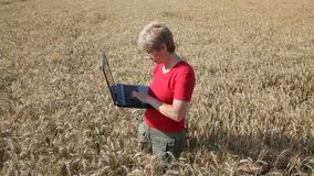 Agricultural expert inspect wheat quality using laptop Royalty Free Stock Photo