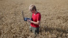 Agricultural expert inspect wheat quality using laptop Royalty Free Stock Photography