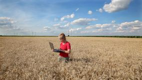 Agricultural expert inspect wheat quality using laptop Stock Photo