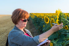 Agricultural expert Stock Images