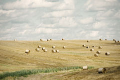 Agricultural Farm Field Stock Photography