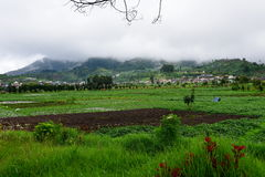 Agricultural farming in Java Stock Photo