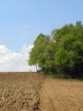 Agricultural Field. And blue sky royalty free stock photo